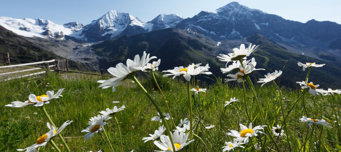 Der Frühling verwandelt die Landschaft in ein Blütenmeer